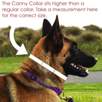 Measure your dog's neck here for the correct size Canny Collar
