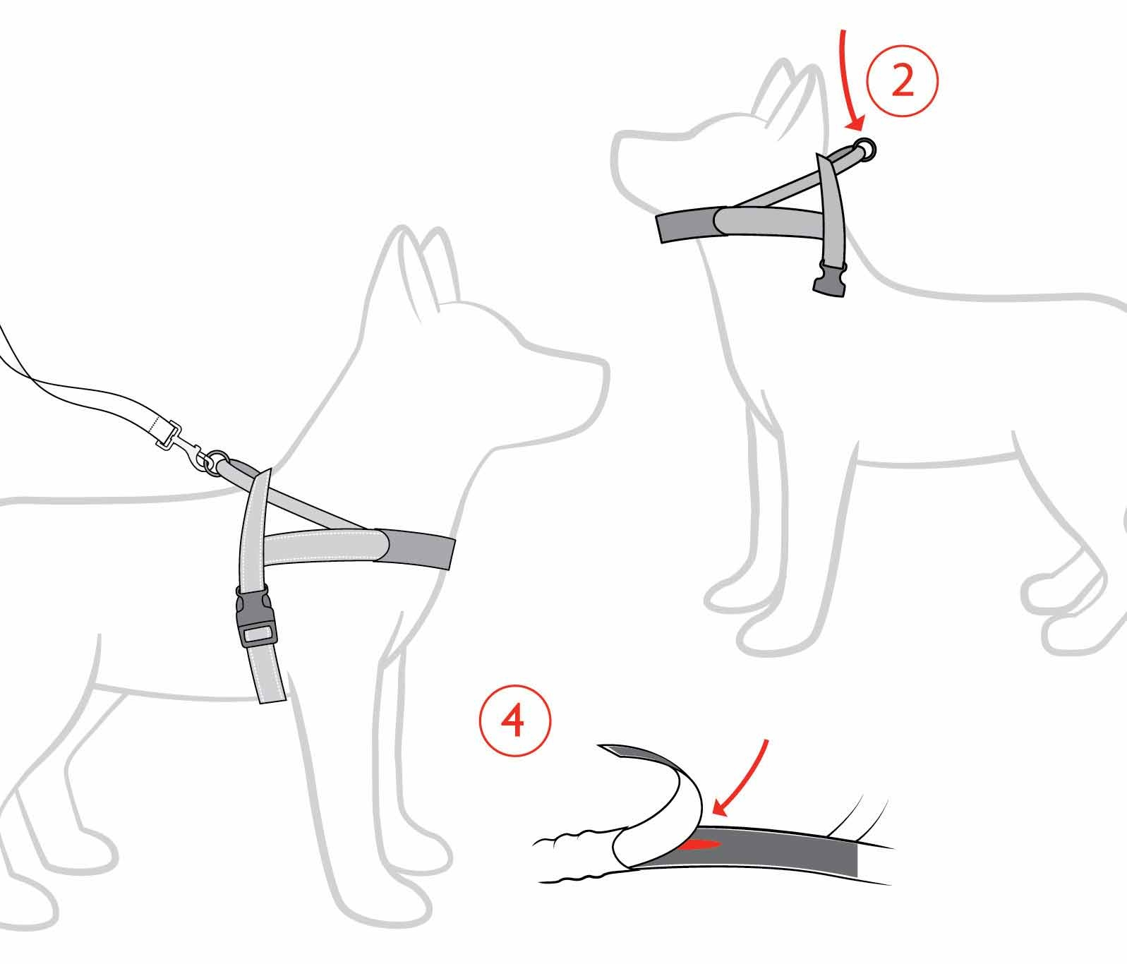 EzyDog Quick Fit Harness Fitting Instructions