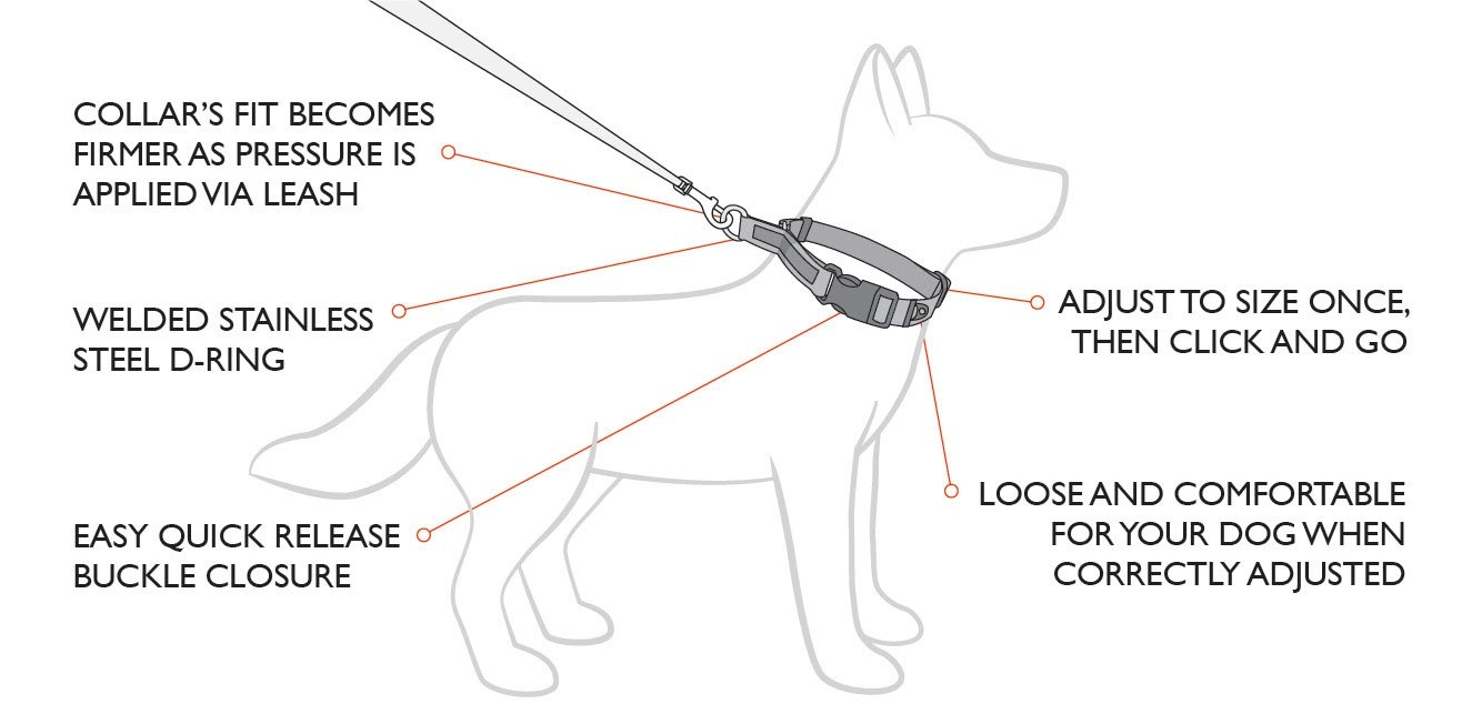 EzyDog Checkmate Collar Features